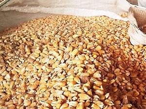 Produtores pdem novo valor para o milho (Foto: Leandro J. Nascimento/G1)